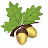 acorn-2229315_960_720